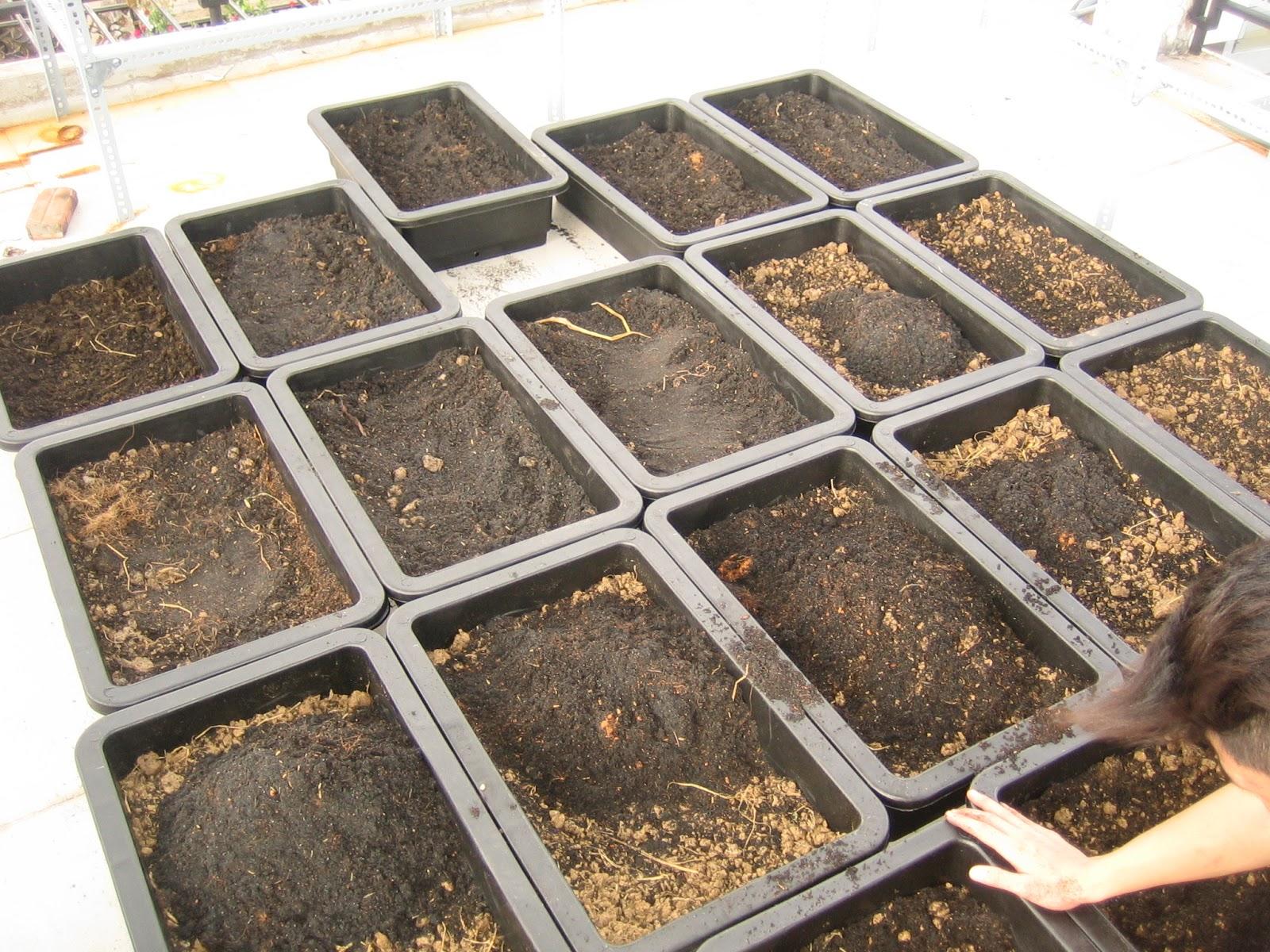 Hướng dẫn cách cải tạo đất trồng rau hiệu quả
