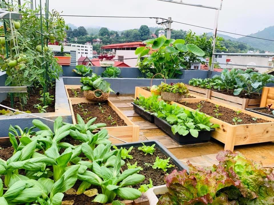 6 bước trồng cây làm vườn sân thượng