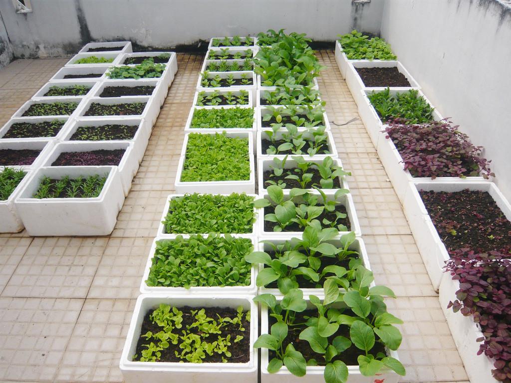 Quy trình làm đất trồng rau hiệu quả