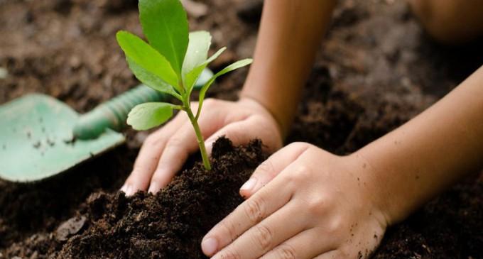 Tầm quan trọng của đất đối với cây trồng