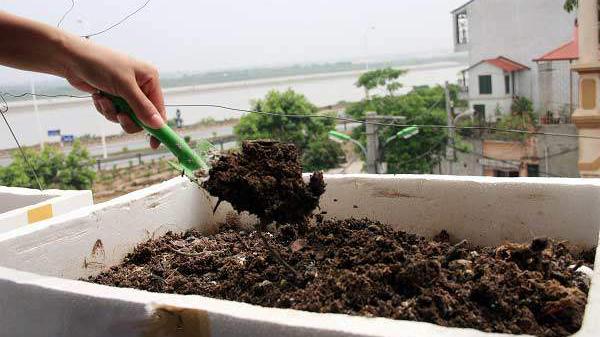 Mẹo trồng rau trong thùng xốp để có vườn rau xanh mơn mởn