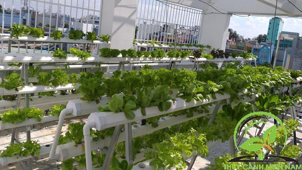 Cách chọn vị trí phù hợp cho mỗi loại rau khi trồng trên sân thượng