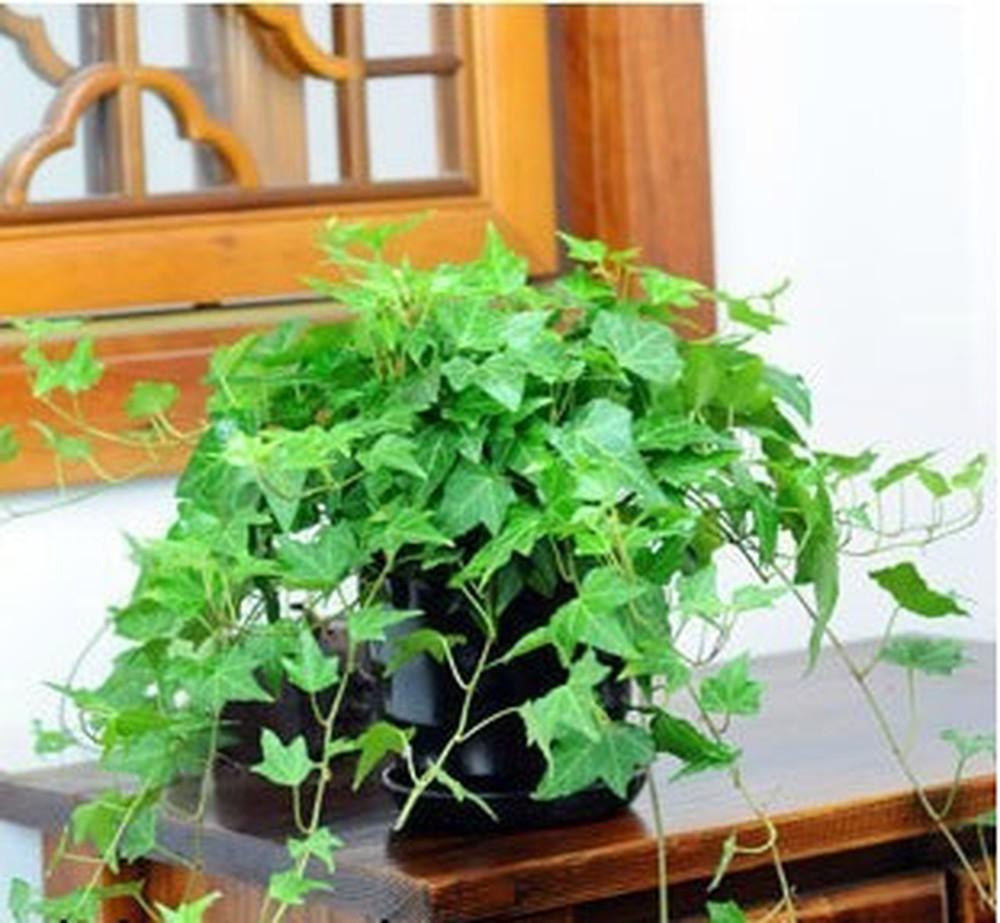 Top 7 cây trồng trong nhà tốt cho sức khỏe