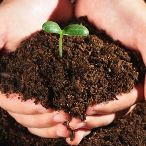 Hướng dẫn cách ủ đất trồng trong chậu đơn giản tại nhà