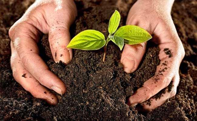 bí quyết trộn đất trồng cây